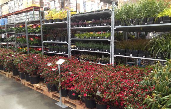 Costco plants