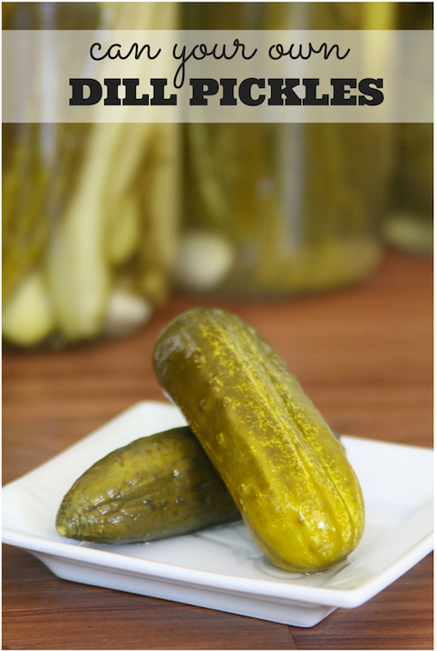 Can your own Dill Pickles at home - Easy and so much better than store bought